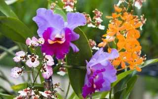 Запаянные цветы в вазе