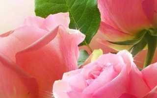 Стих свекрови на юбилей