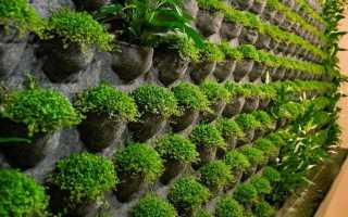 Стена из живых цветов