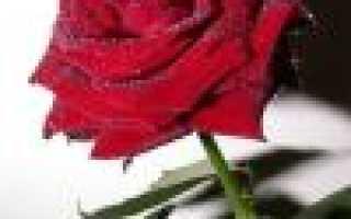 Сценарий розовой свадьбы