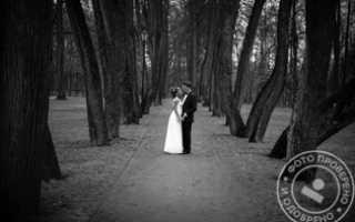 Оператор на свадьбу москва