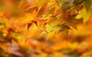 Осенняя игра волшебный зонт