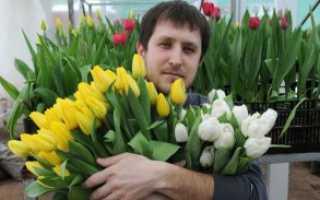 Подарок цветов мужчине