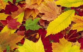 Пейзажи из осенних листьев фото