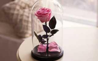 Цветы в закрытой вазе