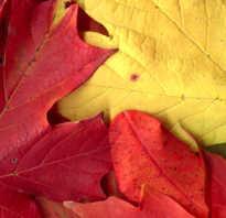 Картины из листьев для детей фото