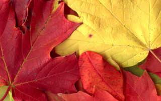 Девушка осень поделка фото