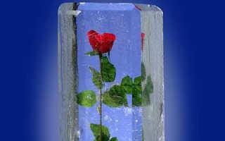 Цветы во льду как сделать